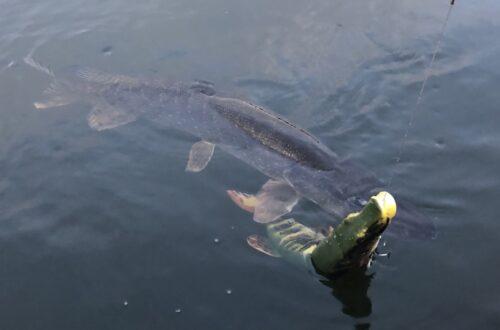E Big bait
